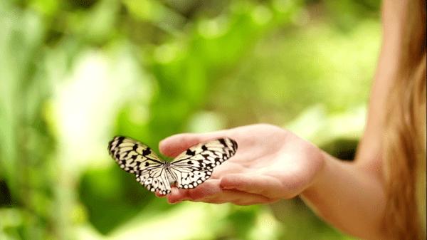 La Serre aux Papillons à La Queue-lez-Yvelines