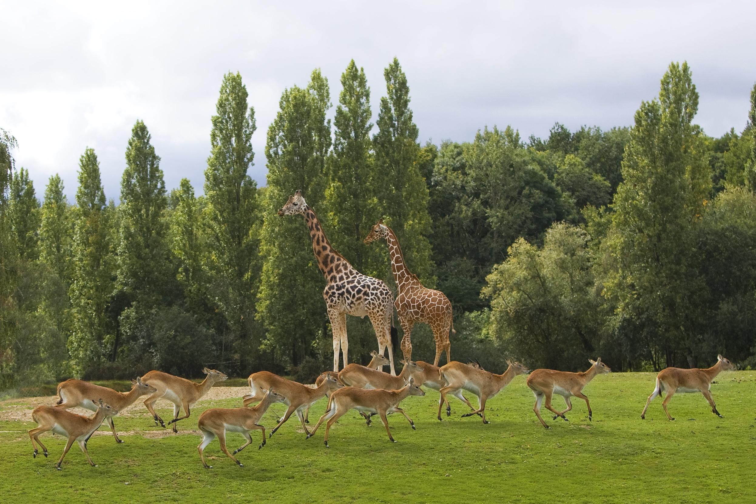 Zoo Safari de Thoiry Yvelines